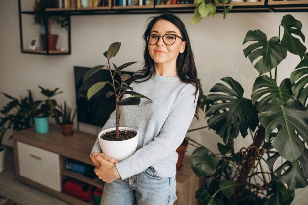 การปลูกต้นไม้ในร่มควรปลูกอย่างไร